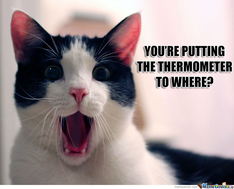 Kitty I Need To Take Your Temperature