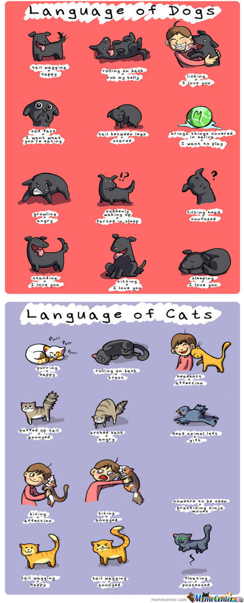 Language Of Pets