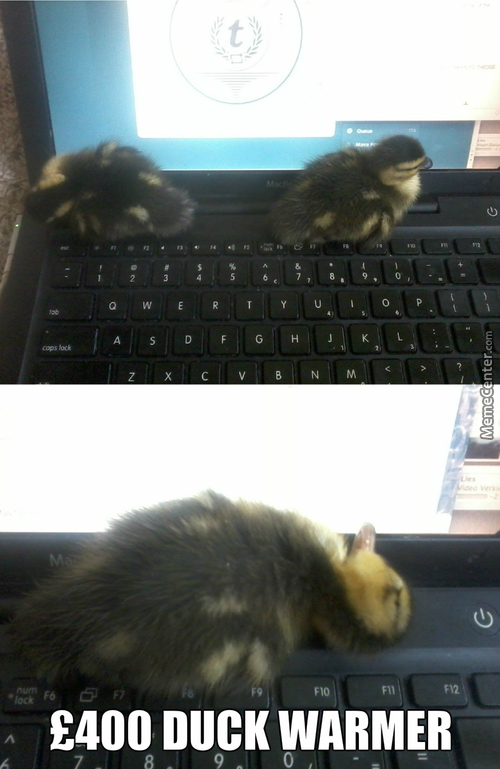 Laptops Are Warm For Sleeping On