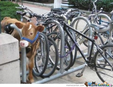 Let Me Just Park My... Cow...