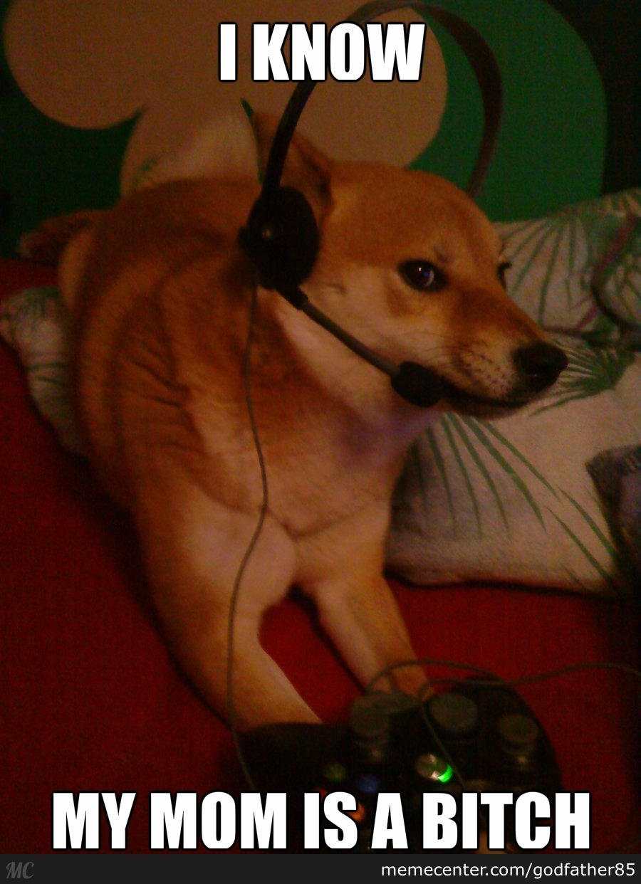 Life As A Gamer Dog.