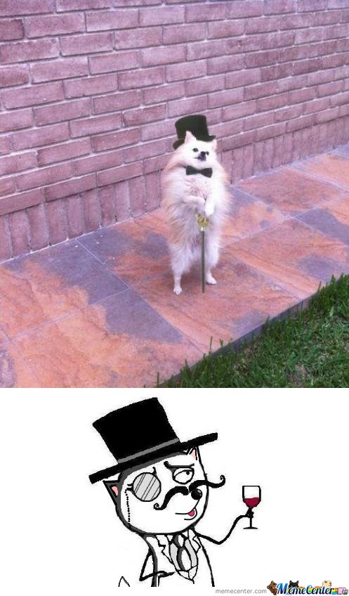 Feel Like a sir Cat