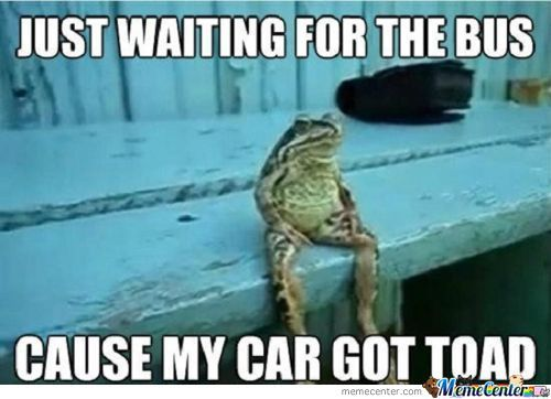 Lol Toad