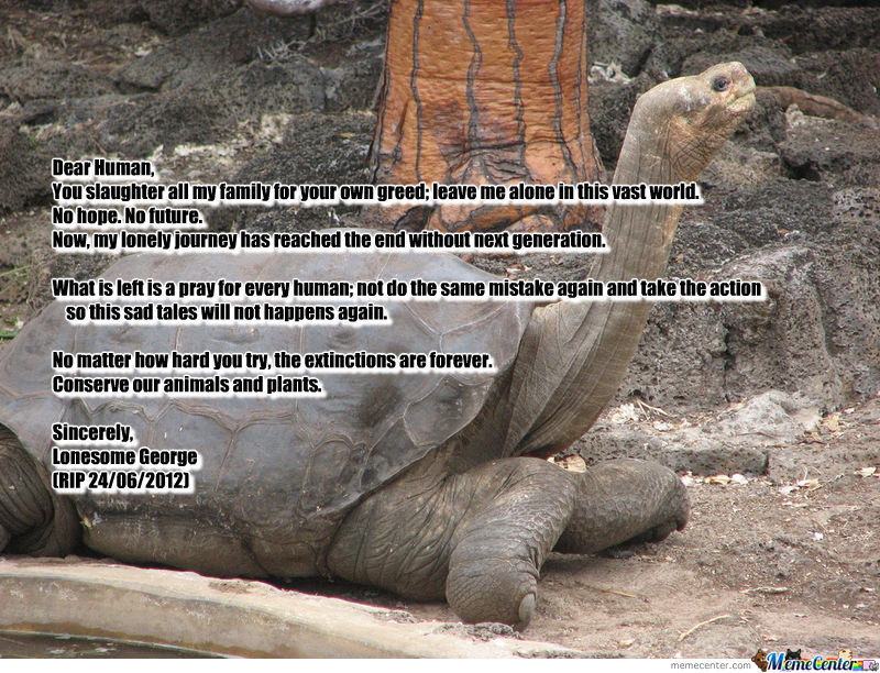 Lonesome George Is Not Forever Alone Again.