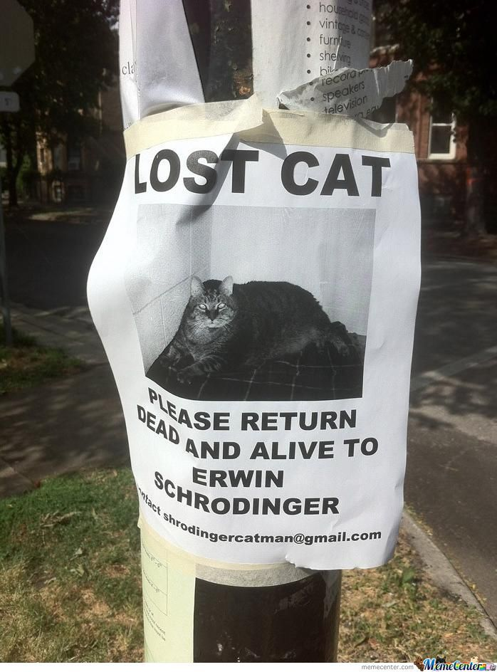 Lost Cat Notice
