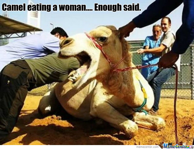 Man Eating Camel. Bring On The Apacolypse.