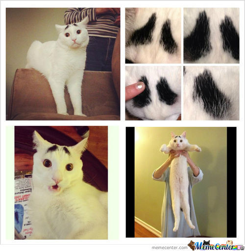 Meet Sam, The Cat With Eyebrows.