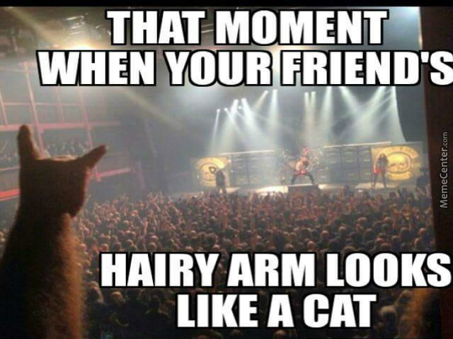 metal-cat-is-metal_o_4678071.jpg