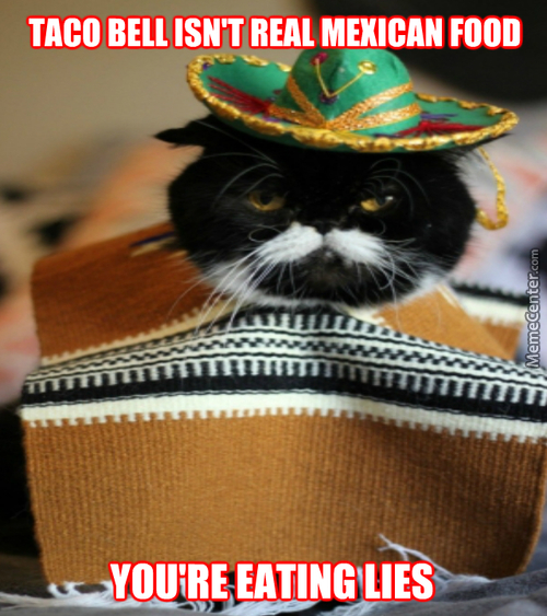 Mexican Cat Tells You The Truth :3