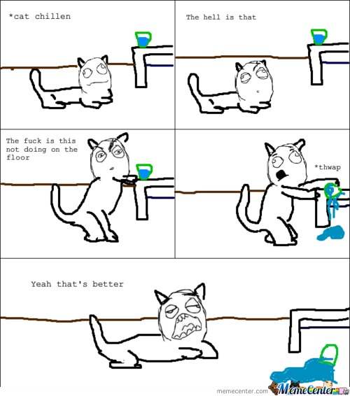Mind Of A Cat