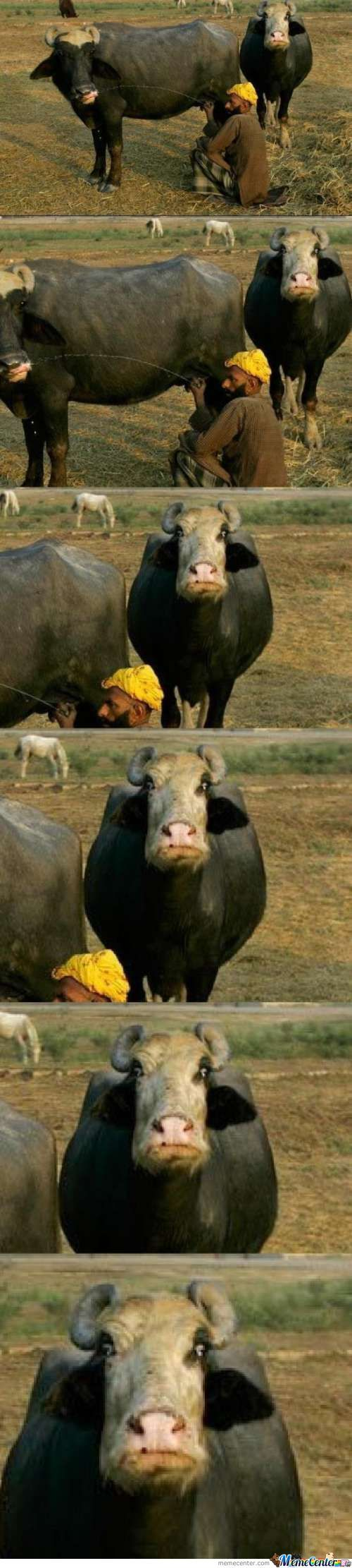 Mindblowned Cow
