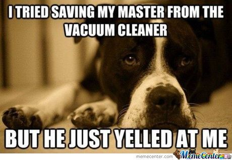 Misunderstood Dog..