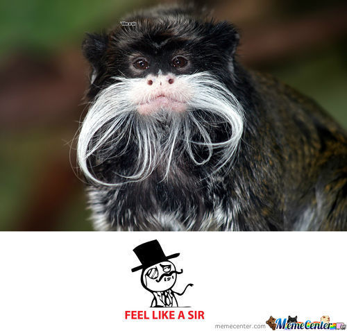 Monkey Is Like A Sir