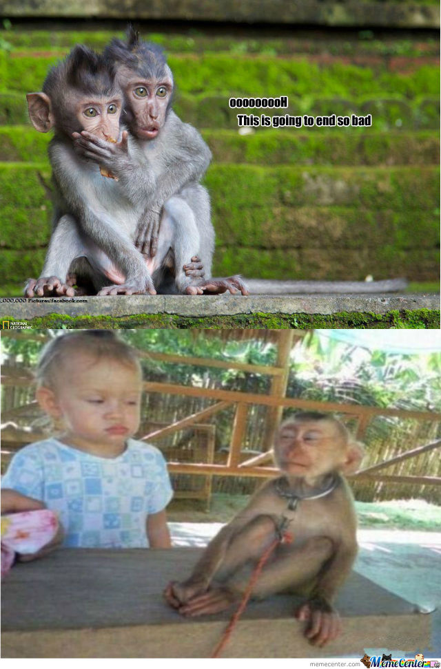 Monkey Reaction