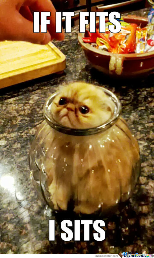 More Proof That Cats Are Liquid