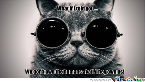 Morpheus Cat Will Show Cats The Real World