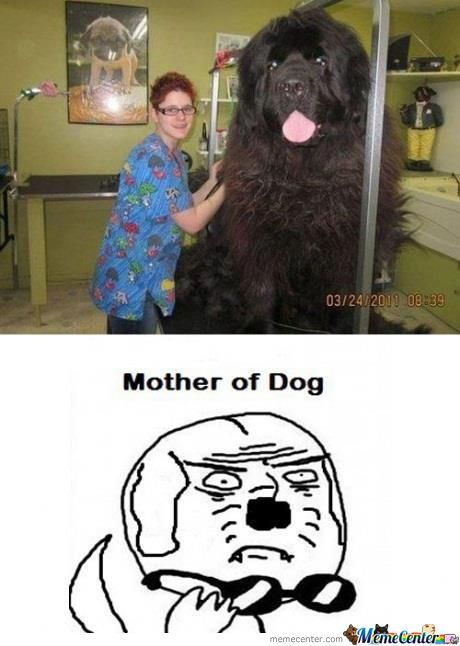 Mother Of Dog