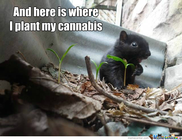 Mouse Plants Cannabis