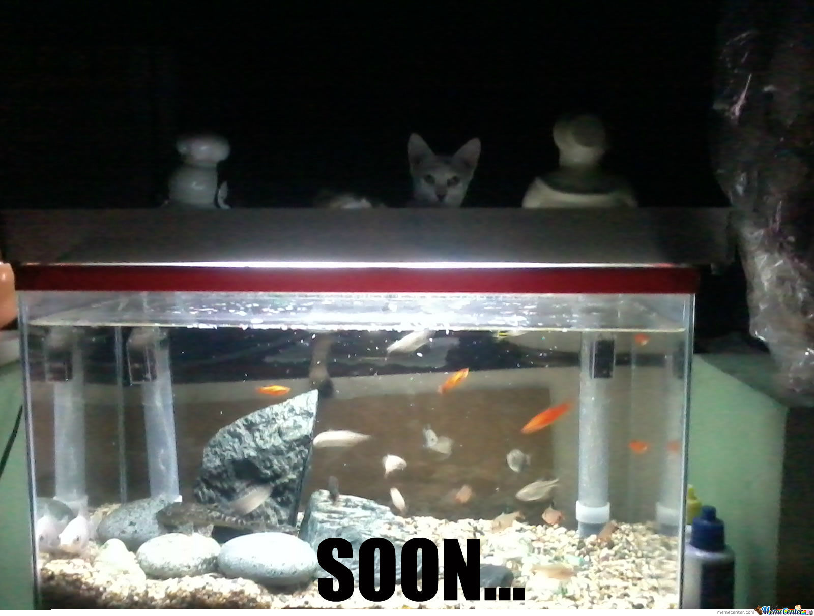 My Cat's Been Like This Since We Got The Aquarium -_-