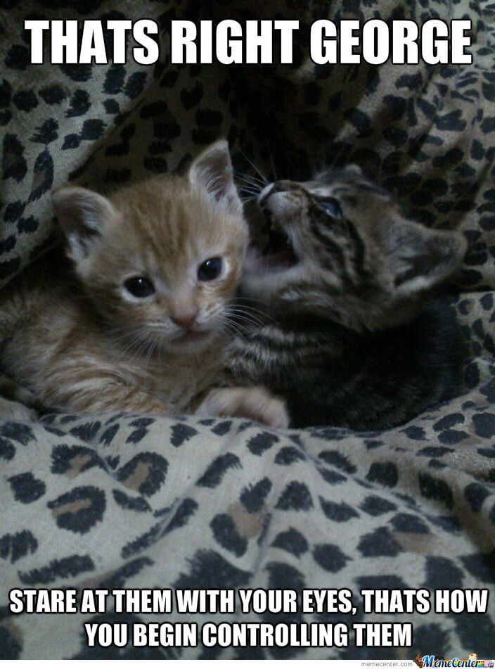 My Friends Kittens, So Kawaii