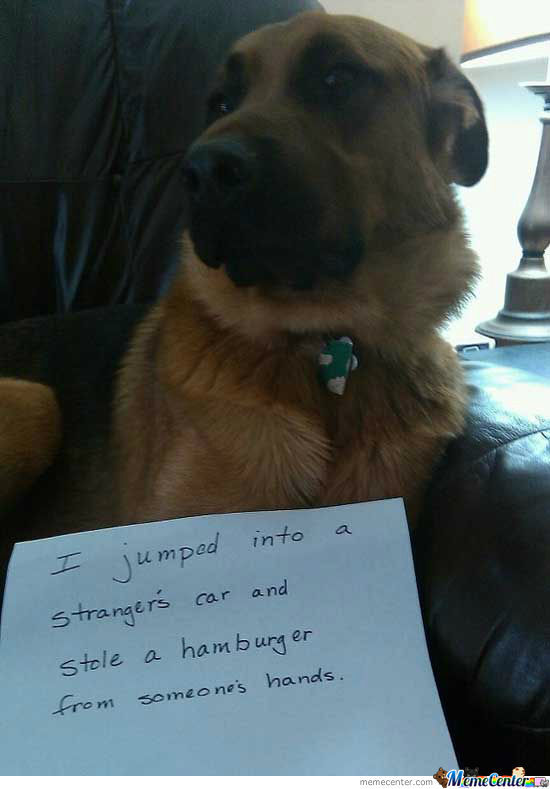 My New Favorite Dogshaming