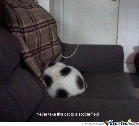 Never Take This Cat To A Soccer Field