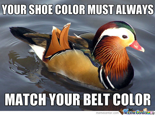"New Meme?- "" Fashion Advice Mallard"""