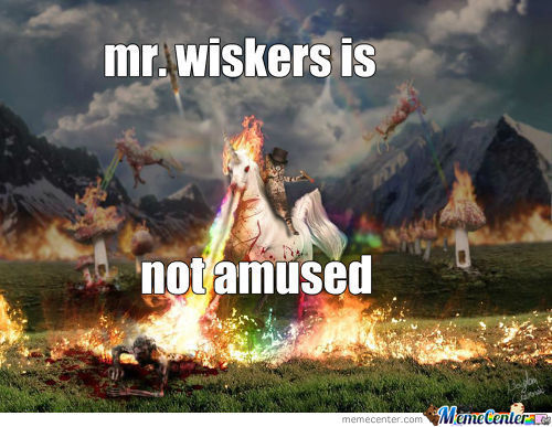 No Mr Wiskers!!!