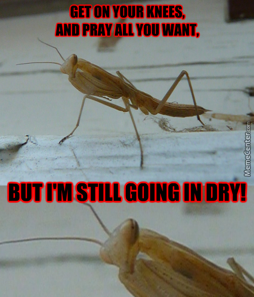 No Prayers, Only Mantis.