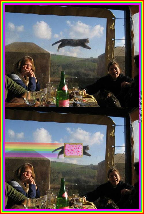 Nyan Cat Is Real?!