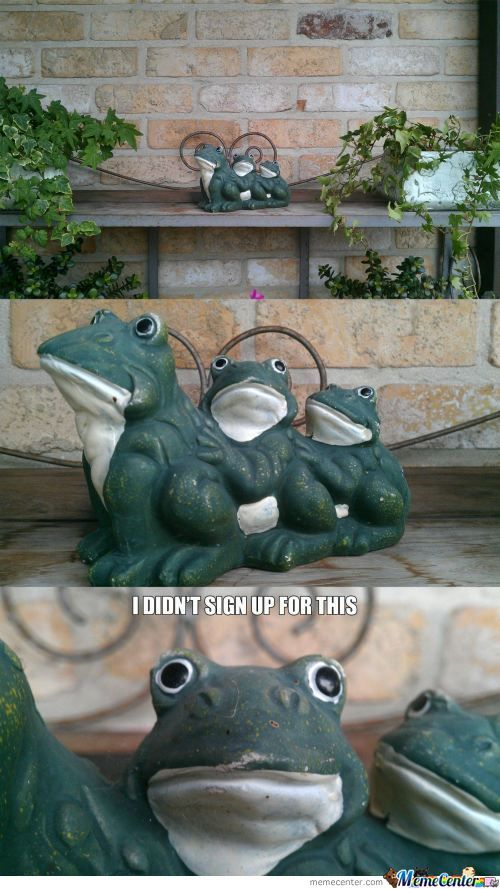 Oh Frog Why