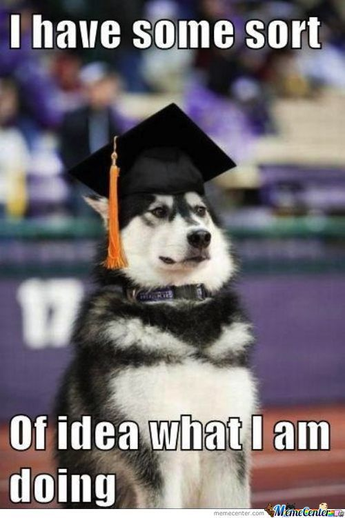 Funny Husky Jokes Meme : Husky memes best collection of funny pictures