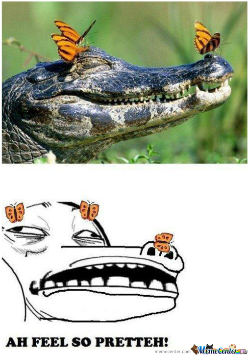 Ok Alligator/crocodile