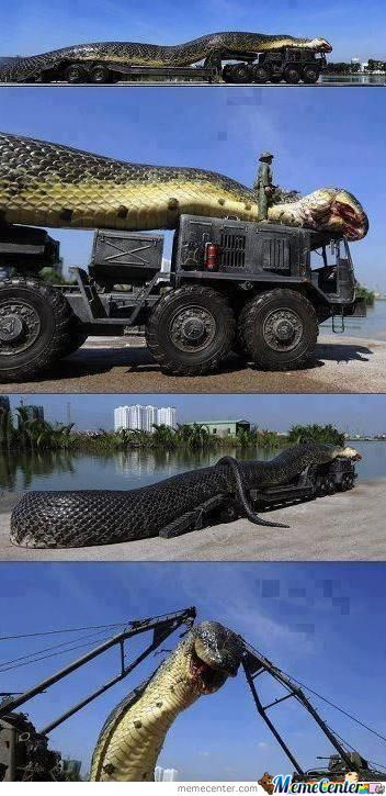 Omg Mother Of Snakes!!!!
