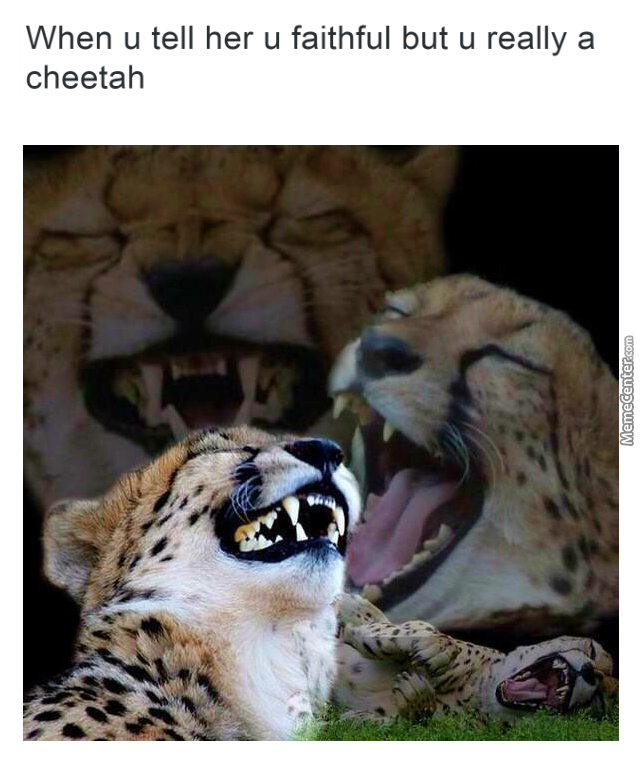 laughing cheetah - photo #16