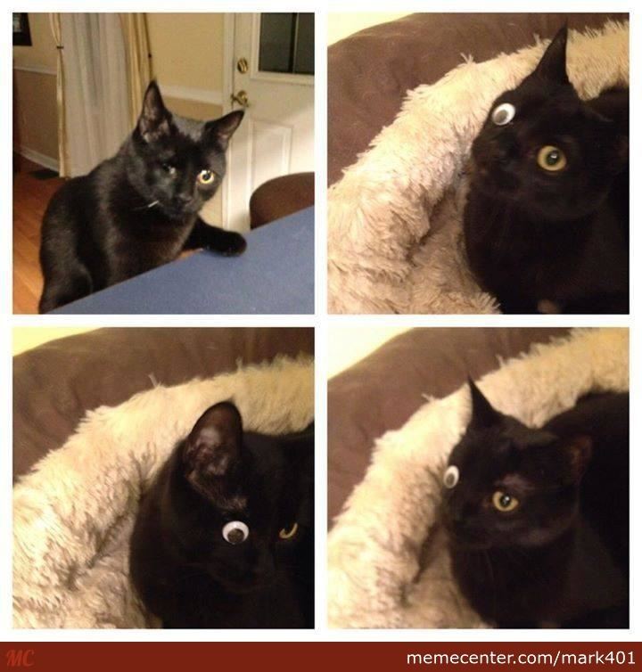 One Eyed Cat,problem Solved