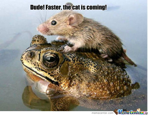 Dude Faster!