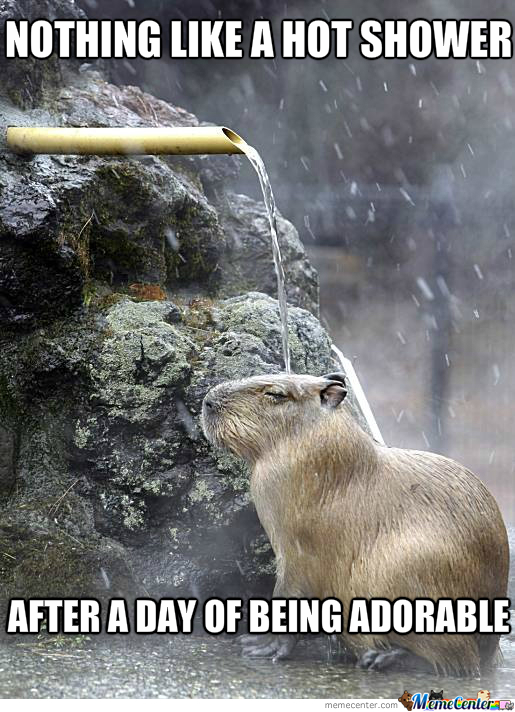 Otter Shower