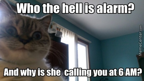 Overly Attached Catfriend