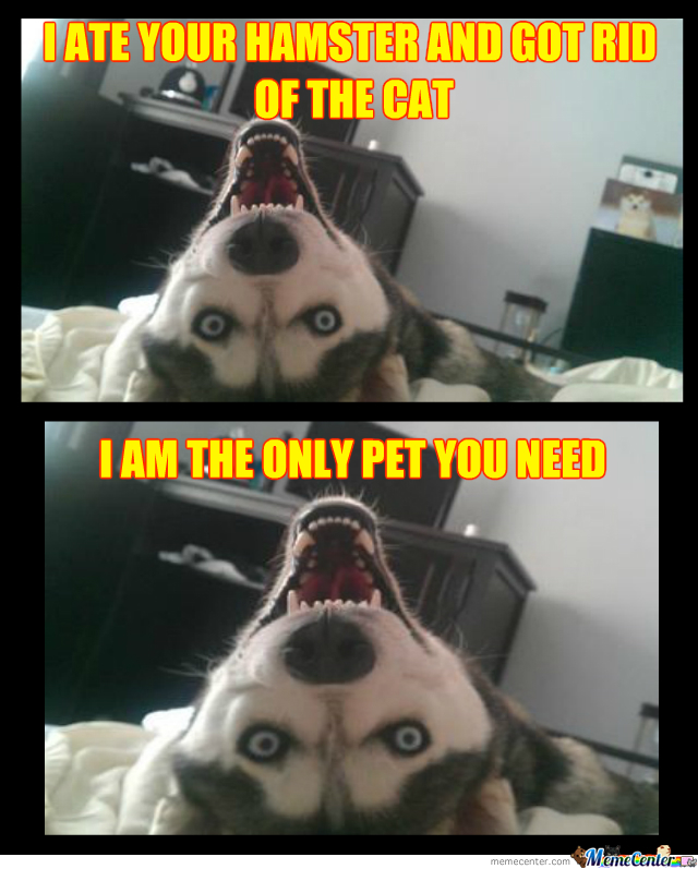 Overly Attached Husky