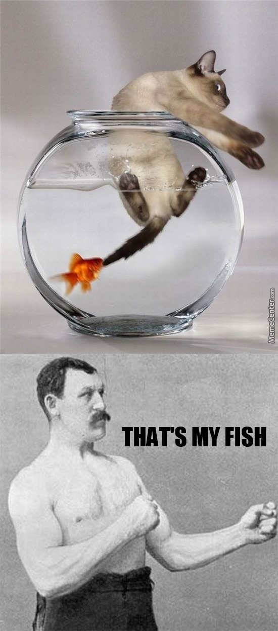 Overly Manly Fish