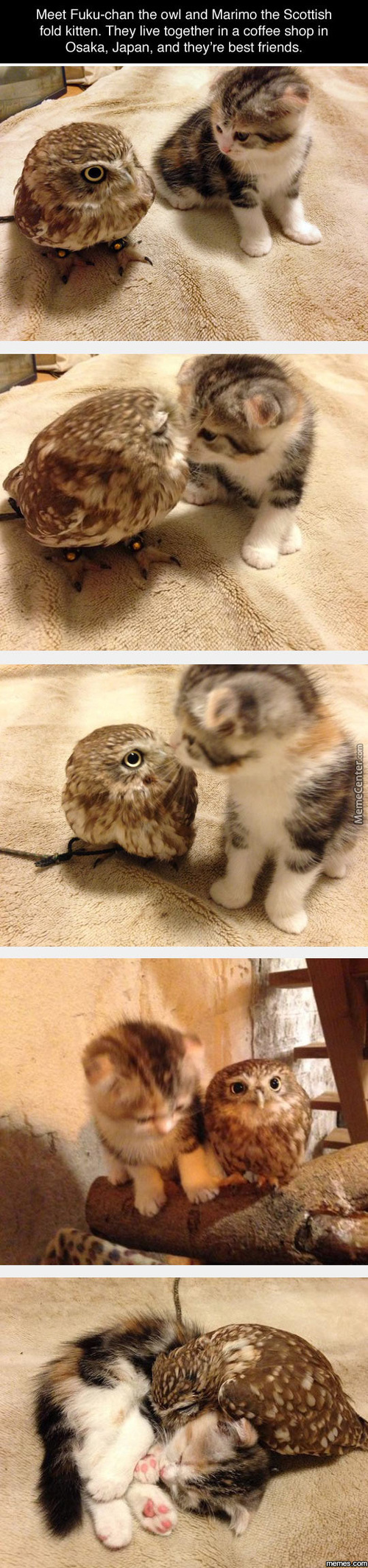Owl And The Cat