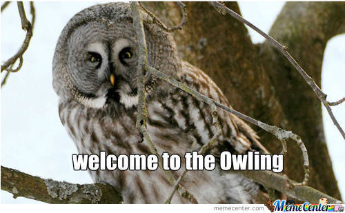 Owl To Meet You