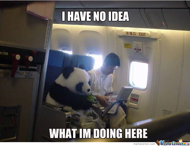 Panda Goes For A Flight