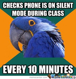 paranoid parrot in class