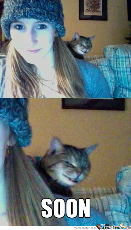 Photobomb Cat