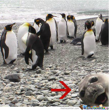 Photobomb Level: Seal