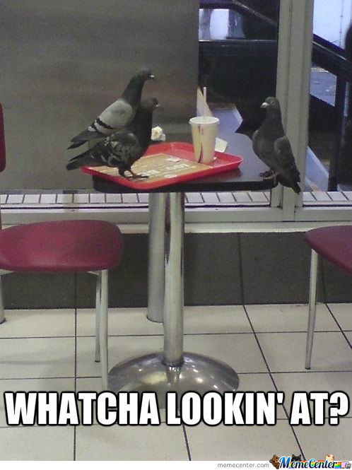 Pigeons At Fast Food Restaurant