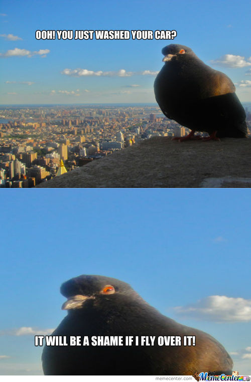 Pigeon memes best collection of funny pigeon pictures