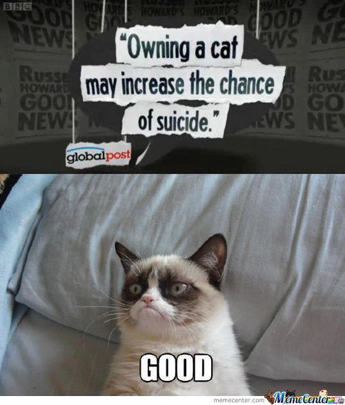 Pissed Cat Wants You Dead